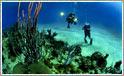 Oplev the big five i Sydafrika - og dyk efter hajer