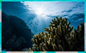 Videnskaben bag kunstige koralrev